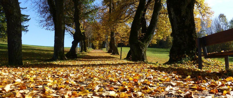 Que venha o outono com sua riqueza e sabedoria