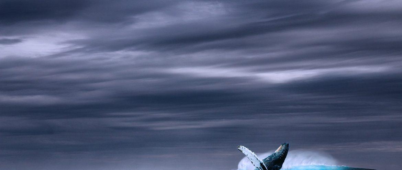 Baleia Azul: um grito da dor humana